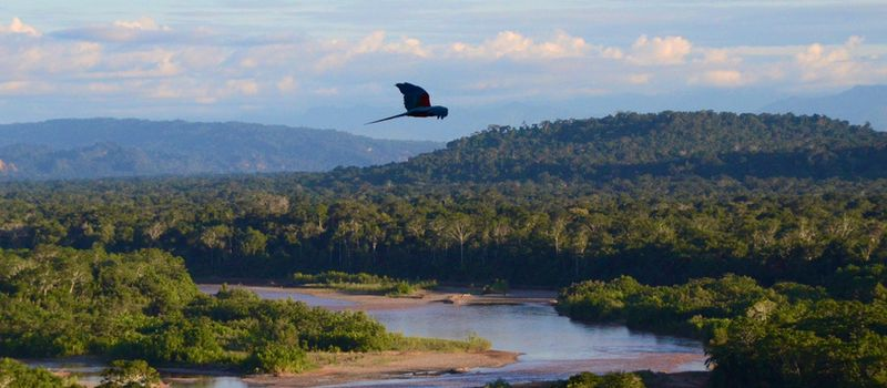 Amazone-Brazilie